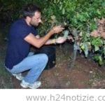 Vendemmia sotto il chiaro di luna a Cori, nella tenuta Pietra Pinta va in scena lo spettacolo della raccolta notturna delle uve