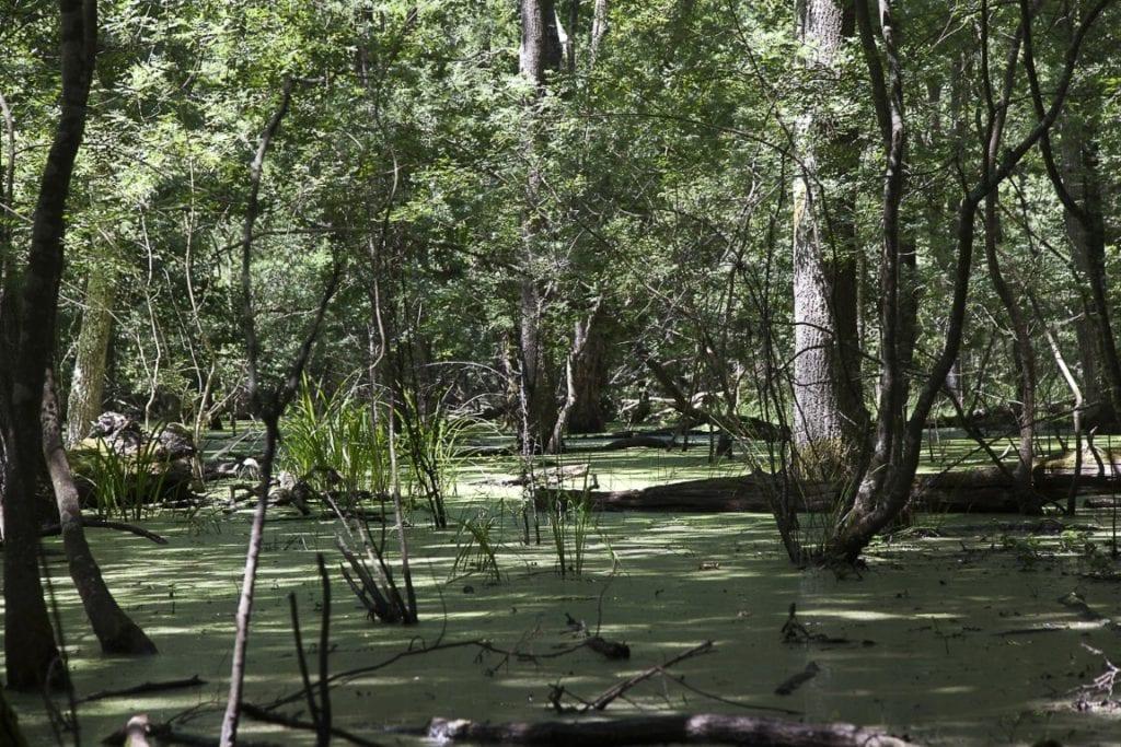 Prosegue il viaggio virtuale al parco nazionale del circeo for Piani del padiglione della piscina