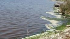 sveesamento lago sabaudia (6)