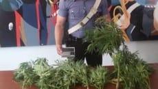 marijuana-sequestro-aprilia