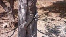 monumento ponza