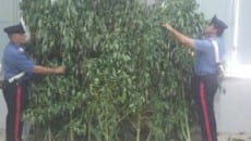 sequestro-marijuana-monte-san-biagio
