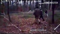 Daino salvato da un branco di cani a Cerasella, plauso agli ex forestali