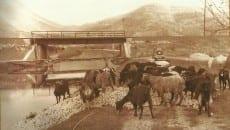 """""""Arance alle capre per protesta, foto Zannettino"""""""