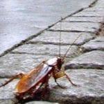 """""""Città invasa da insetti e blatte"""", la denuncia di Formia ConTe"""