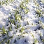 Agricoltura, danni da gelata: risarcimenti milionari a Latina e Castelforte
