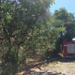 Albero piomba sulla provinciale per Coreno Ausonio: divelto palo Telecom, strada bloccata