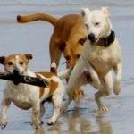 Fondi, cani in spiaggia malgrado l'ordinanza (forse impugnabile)
