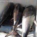 Tonno rosso pescato illegalmente: sequestro e multa da 8mila euro a Formia