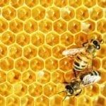 """Acli Terra, appello ai parlamentari europei del Lazio: """"Più soldi agli apicoltori"""""""
