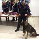 Operazione antidroga ad Aprilia: dieci le ordinanze di custodia cautelare