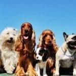 Formia, weekend con la rassegna canina