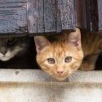 Formia, il Tar salva la colonia felina