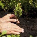 Interventi di forestazione urbana a Latina: riaprono i cantieri