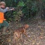 Scambiato per un cinghiale, ferito da una fucilata durante la battuta di caccia