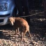 Cane bloccato in una tana nel Parco, liberato dai carabinieri forestali