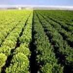 """Acli Terra Lazio: """"L'INPS ha fissato le aliquote contributive per i lavoratori del settore agricolo"""""""
