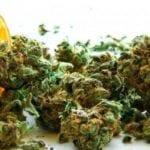 """Cannabis terapeutica, cura """"impossibile"""": le storie – VIDEO"""