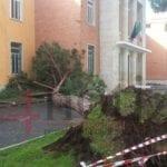 Latina, un albero crolla sulla scuola