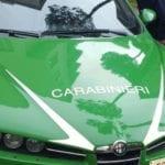 I Carabinieri forestali sequestrano un terreno agricolo adibito ad officina e rivendita auto