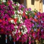 """Riparte il concorso """"Balconi fioriti"""": i dettagli e i premi"""
