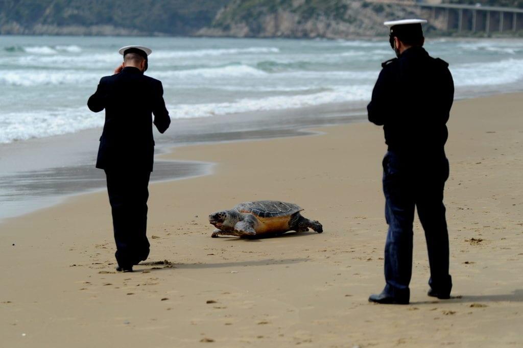 Tartaruga Morta A S Agostino A Gaeta 232 La Seconda Di Oggi