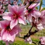 """""""Benvenuta Primavera"""", la marcia ambientalista di Fare Verde: il programma in agenda a Fondi"""