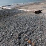 Erosione costiera, l'impegno del Comune di Formia in difesa dei litorali