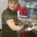 Golfo, Caretta Caretta recuperata e affidata alla stazione zoologica di Portici