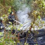 Auto finisce contro un albero e prende fuoco