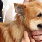 Giornata del microchip gratuito per i cani a Latina: l'Ordine dei veterinari dice 'no'