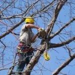 Divieti di sosta a Gaeta per lavori di pulizia, potatura alberi e taglio erba