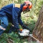 Sorpreso a tagliare alberi dai Carabinieri: arrestato un uomo di Latina