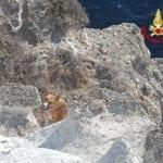 Cane in trappola sul costone a strapiombo sul mare, il salvataggio – GALLERY