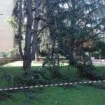 Cisterna, il caldo fa collassare un grosso ramo di pino