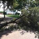 Formia, cade un grosso ramo nella villa comunale: paura e polemiche – VIDEO