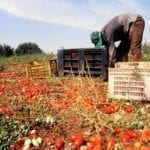 Braccianti non pagati, lite nell'azienda agricola: uno investito
