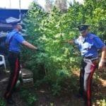 Otto piante di marijuana in casa, 68enne denunciato