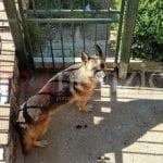 Fondi, l'Asl dal cane che ha azzannato il medico morto in ospedale