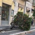 Formia, cade un albero in pieno centro: paura in via Vitruvio