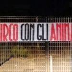 """""""No al circo con gli animali"""", protesta di CasaPound ad Aprilia"""