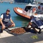 Raccoglie oltre 2mila datteri di mare, pescatore di frodo fermato a Minturno