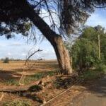 Una mappa degli alberi per censire le situazioni a rischio