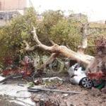 """Simeone (FI): """"Per i danni in provincia di Latina chiederemo in Regione lo stato di calamità naturale"""""""