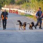 #FOTO – Cani da caccia contro l'emergenza cinghiali: operazione al via