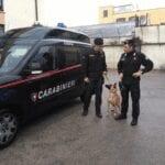 Terracina, servizio antidroga nelle scuole: segnalato un minore per possesso di marijuana