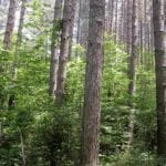 """""""Ossigeno"""", finanziati 100 progetti che porteranno 42mila nuove piante"""