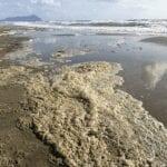 Schiuma gialla sulla spiaggia e chiazze in acqua, cosa succede sul lungomare?