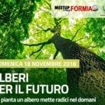 """Iniziativa 'Alberi per il futuro': il MeetUp 5 Stelle di Formia risponde """"presente"""""""