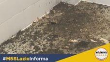Frantoio pubblico di Sonnino a rischio, Pernarella (M5S) chiede lumi – VIDEO
